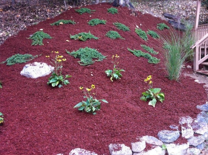 red mulch and flowering